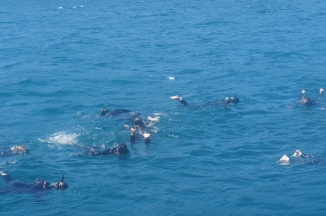 Our snorkel group -- the dolphins were under us!