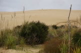 One of the sand dunes -- those are people at the top!