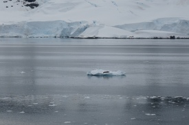 A seal sunning itself on the iceberg